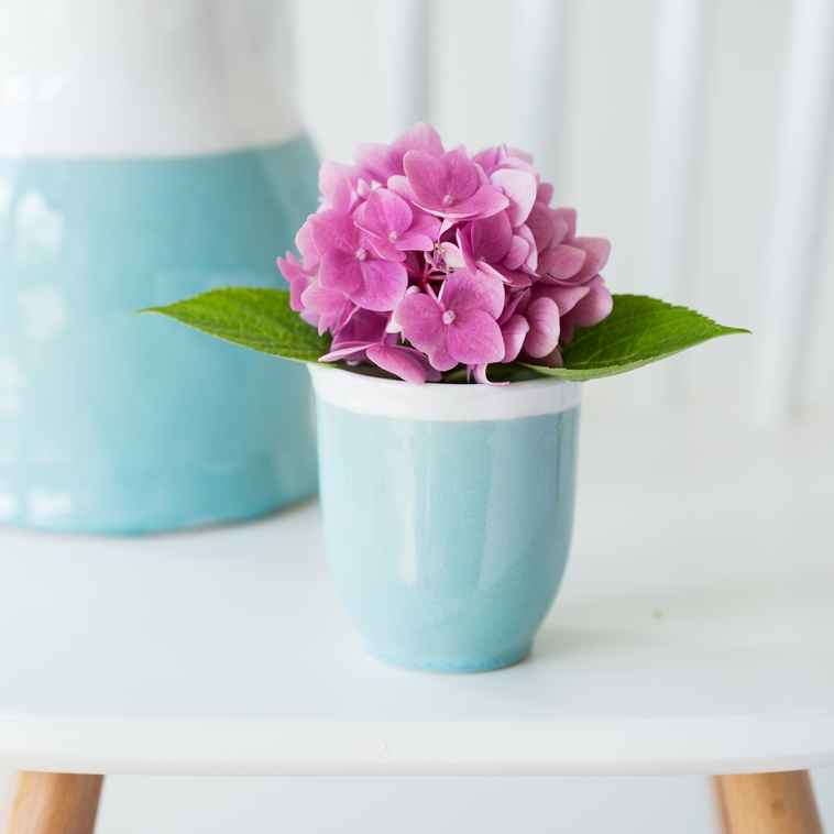 Blumentöpfchen, 9527 Lagune