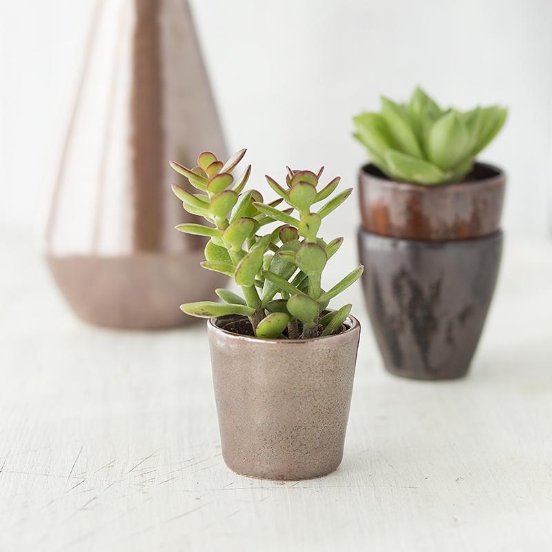 Pflanzentöpfchen, 9545 Gloria